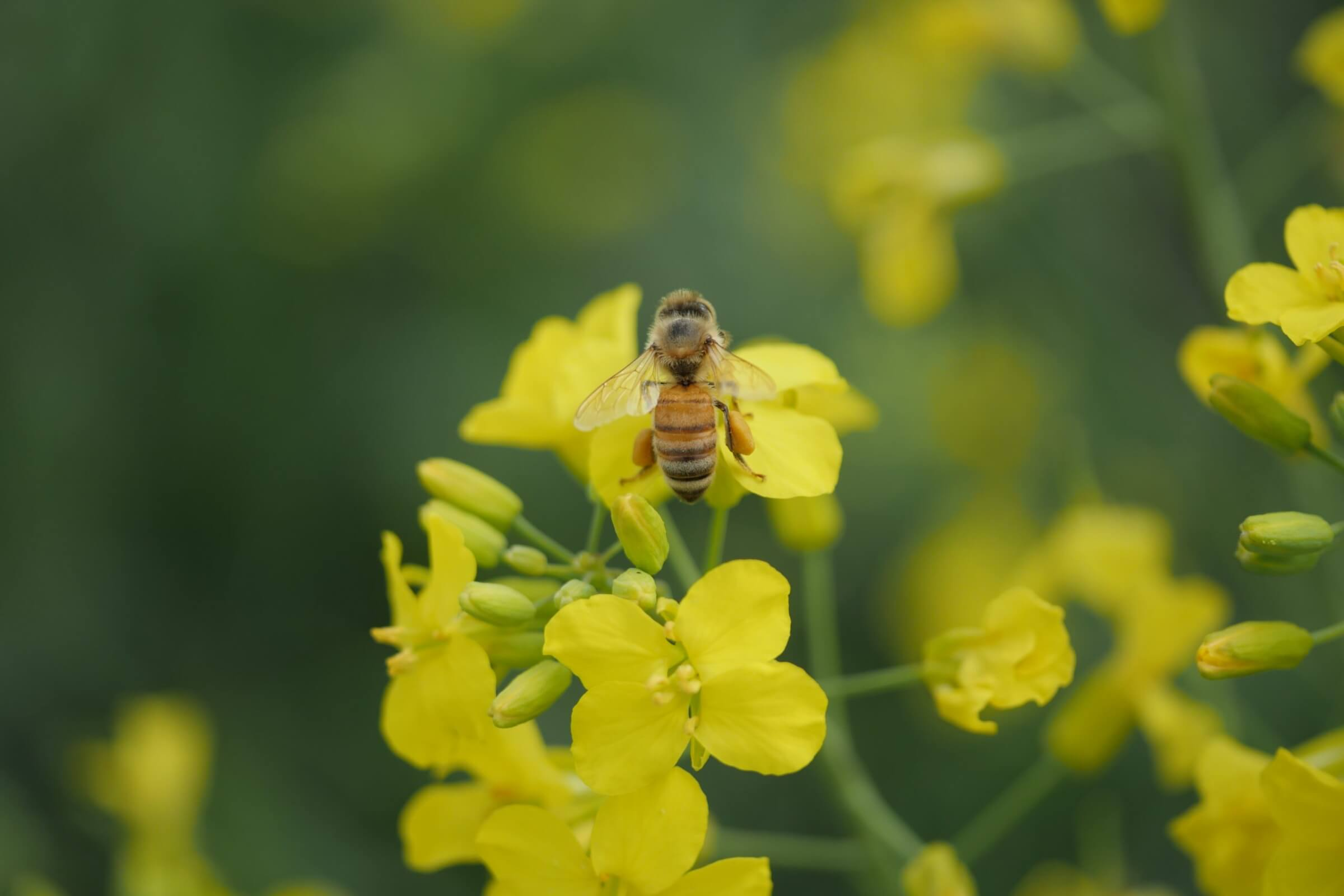 pollinators-bee-health-and-neonicotinoids