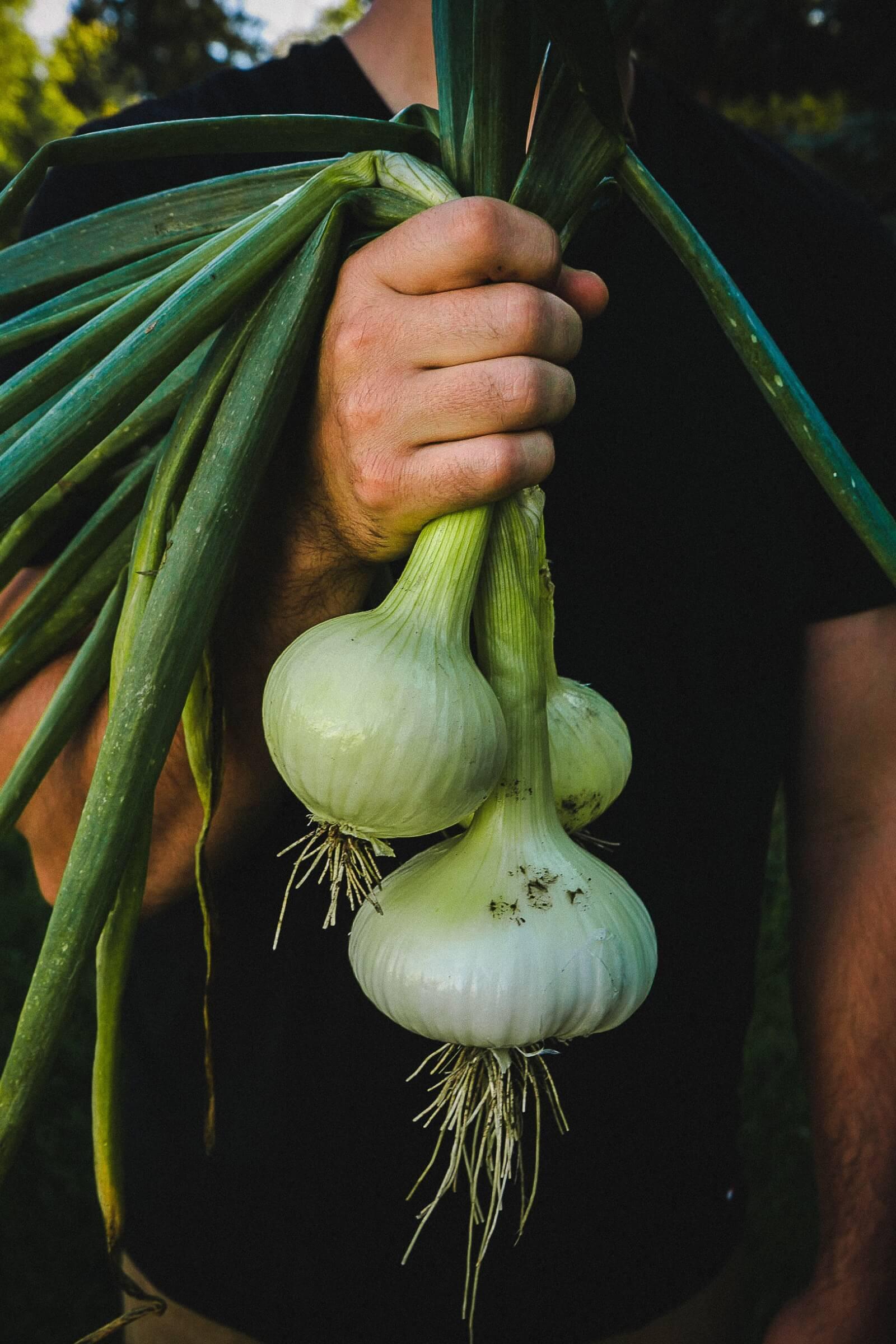 buying-organic